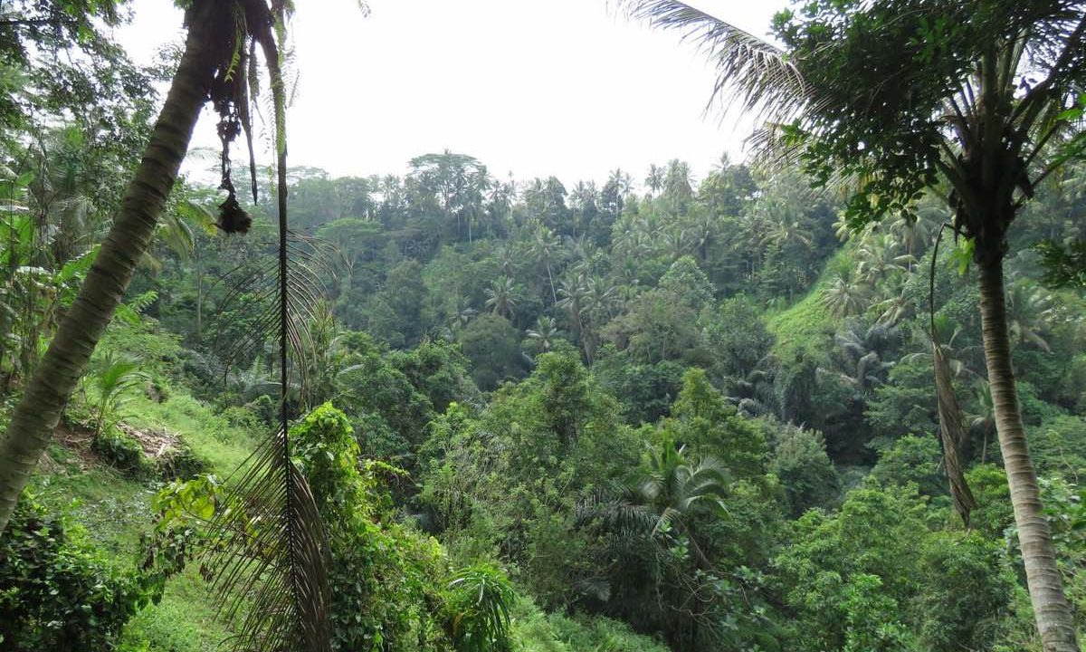 40_are_land_in_Ubud_1