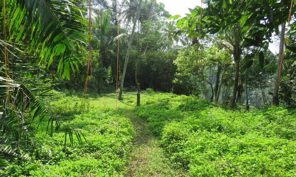 40_are_land_in_Ubud_10