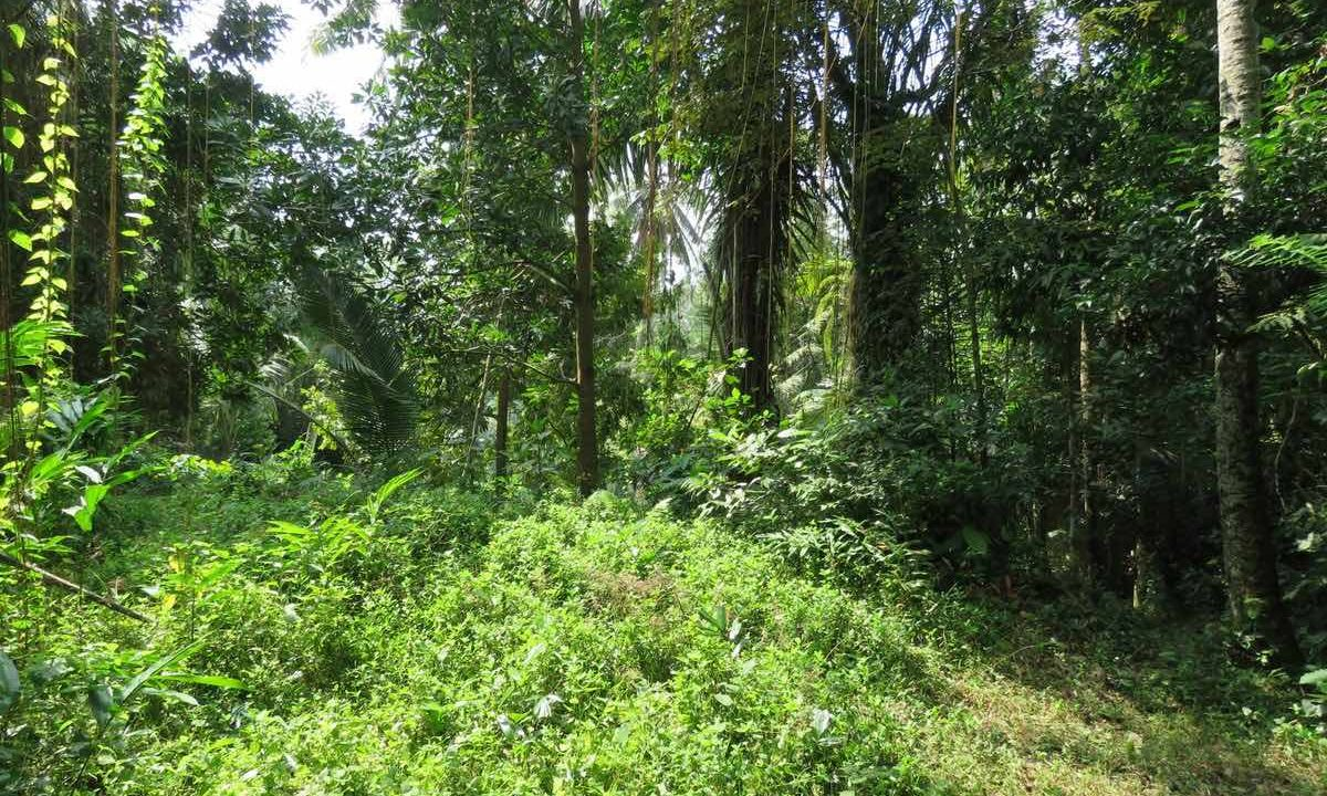 40_are_land_in_Ubud_13