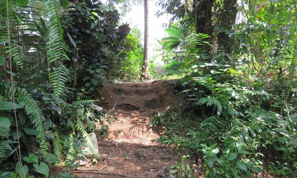 40_are_land_in_Ubud_14