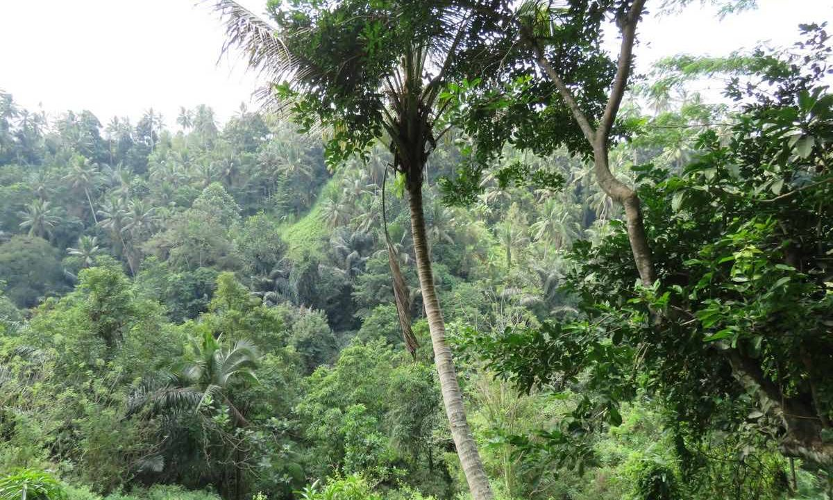 40_are_land_in_Ubud_2