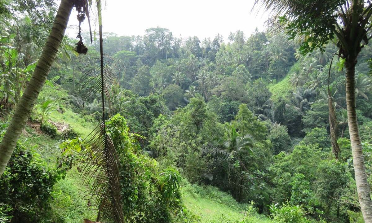 40_are_land_in_Ubud_3