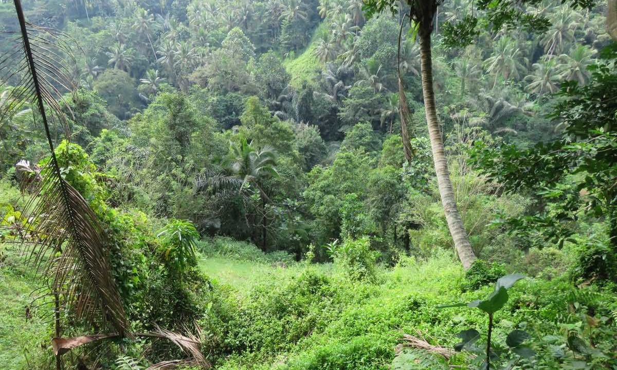 40_are_land_in_Ubud_4