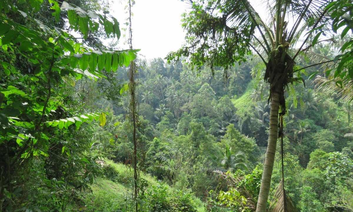 40_are_land_in_Ubud_5