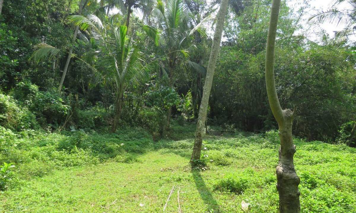 40_are_land_in_Ubud_8