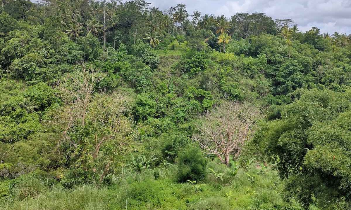 8 are plot for lease in Gianyar-1